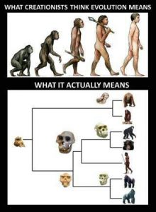 Evolution True or False